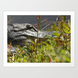 Got My Eye On You Art Print