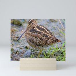 Bird Series: Wilson's Snipe Mini Art Print