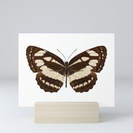 "Butterfly species Neptis hylas ""Common Sailer"" Mini Art Print"