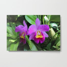 Orchid Witch Metal Print
