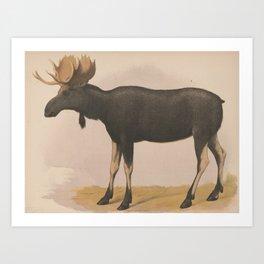 Vintage Illustration of a Moose (1874) Art Print