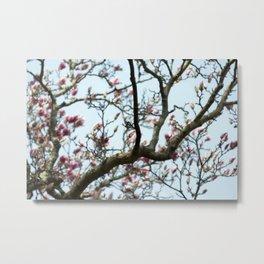 Tulip Tree Bud Metal Print