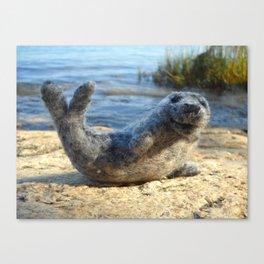 Harbor Seal on the rocky Maine coast Canvas Print