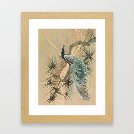 Peacock In The Pines Framed Art Print