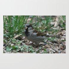 House Sparrow Rug