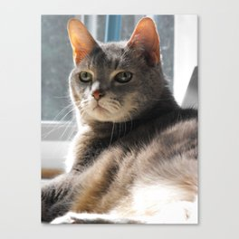 King-Cat Canvas Print