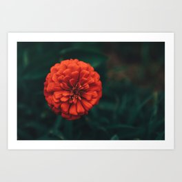 Divine Floral Art Print