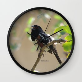 Spotted Towhee Scopes the Oak Grove Wall Clock