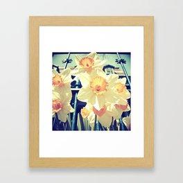 Alexander's Daffodils Framed Art Print