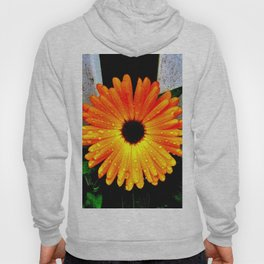 Orange Garden Marigold in the Evening Hoody