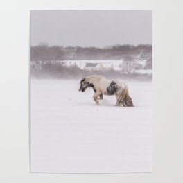 Lonely horse in the snow Poster