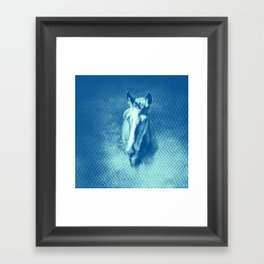 Horse emerging from the blue mist Framed Art Print