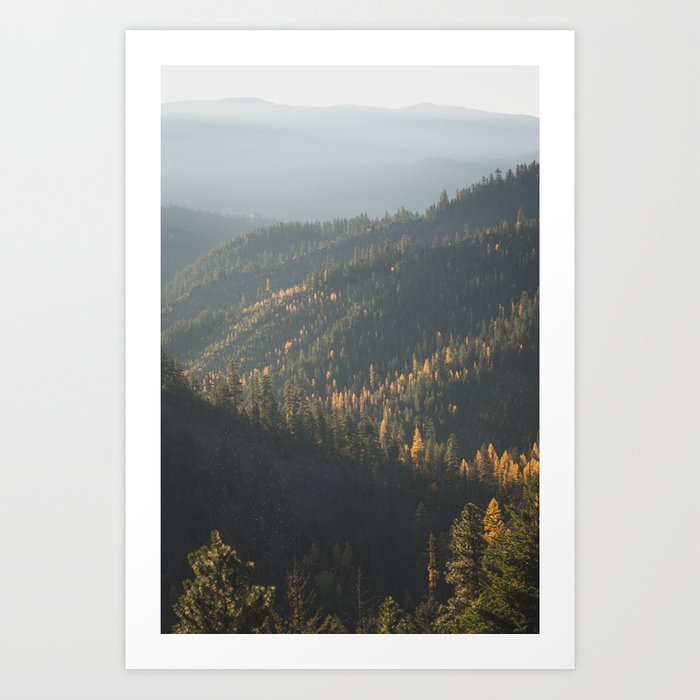 Larches Art Print