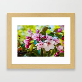 Pink apple blossom Framed Art Print