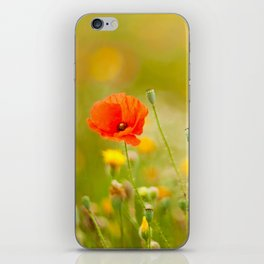 poppy flower in a field in summer iPhone Skin