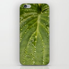 Dewy Leaf iPhone Skin