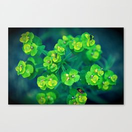 Green rhapsody Canvas Print