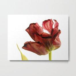 mature beauty Metal Print