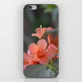 Orange Rhododendron in bloom iPhone Skin