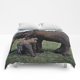Wild African Elephants -Mother And Baby Comforters