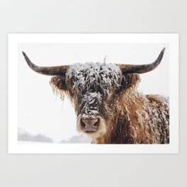 Snow Covered Highland Cow Art Print
