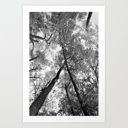 Looking Up in Black and White Art Print