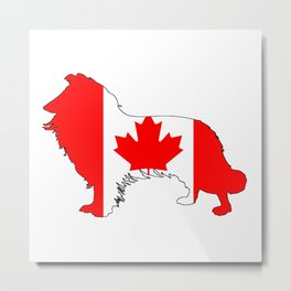 Canada Border Collie Metal Print