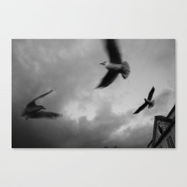 RiverGulls - 3 Canvas Print