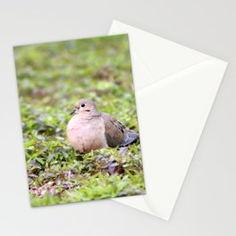Mourning Dove Resting Stationery Cards