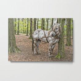 Belgian workhorse Metal Print