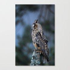 LONG-EARED OWL ON POST Canvas Print