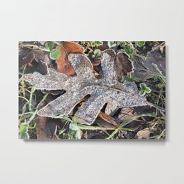 Frost Tipped Fall Metal Print