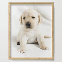 Golden labrador puppy Serving Tray