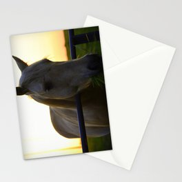 Beautiful Horse at Sunset Stationery Cards