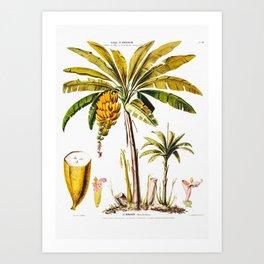 Le Bananier Tropical Tree Art Print
