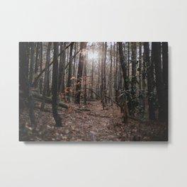 North Carolina Fall Metal Print