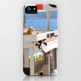 Dog on a Hot Tin Roof iPhone Case