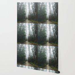 The Redwood Road - 10/365 Wallpaper