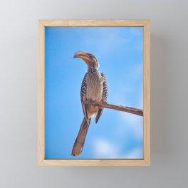 Hornbill on his Perch Framed Mini Art Print