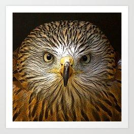 Red Kite Portrait Art Print
