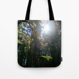Light Through the Branches Tote Bag