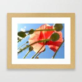 wild poppy Framed Art Print