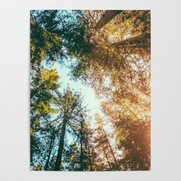 California Redwoods Sun-rays and Sky Poster
