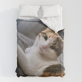 Cat by Curtis Thornton Comforters
