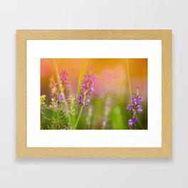 Towards the summer Framed Art Print