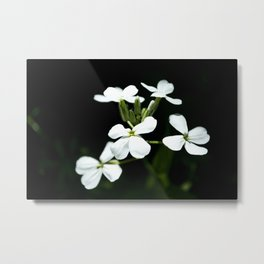 Little White Flowers Metal Print