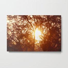 Canopy Sunrise Metal Print