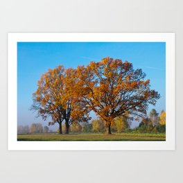 Oaks in the misty Autumn morning (Golden Polish Autumn) #2 Art Print