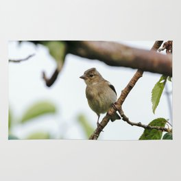 Young Chaffinch Songbird Bird Perching on a Branch - Wales, UK Rug