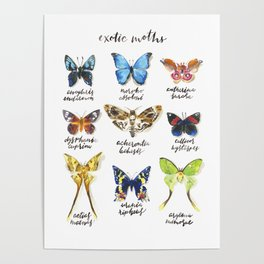 Exotic Moths Poster